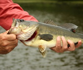 Guided Fishing Trips